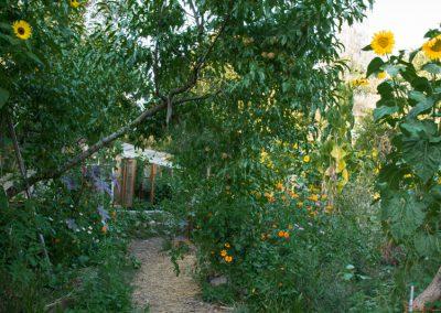 Jardin-du-Tilleul-5886